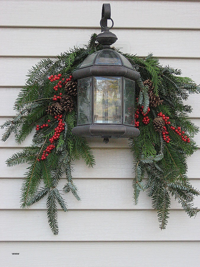 outdoor decorative holiday plants